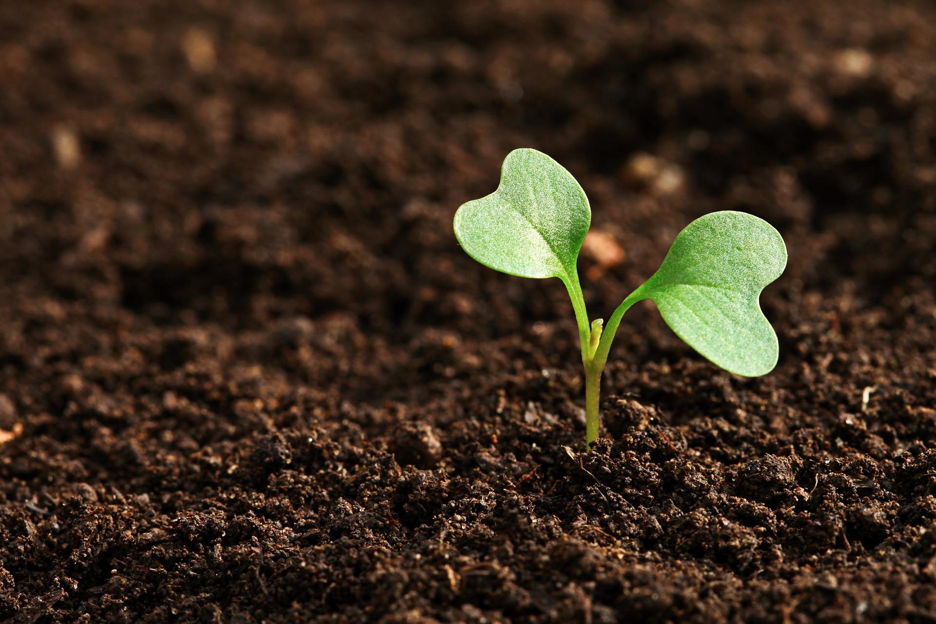 Como coletar amostras do solo para análise