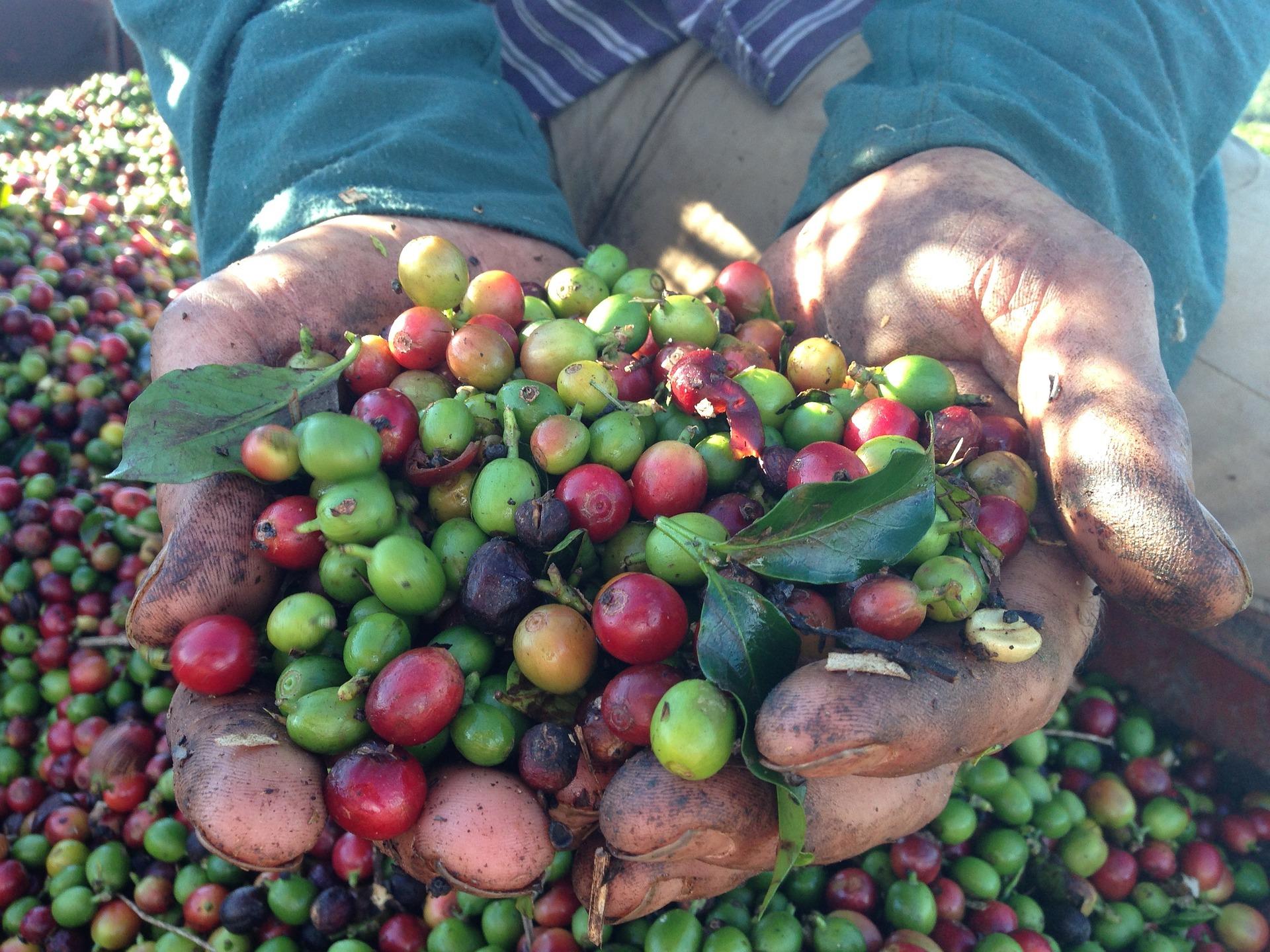 A legislação e a preservação ambiental na cafeicultura